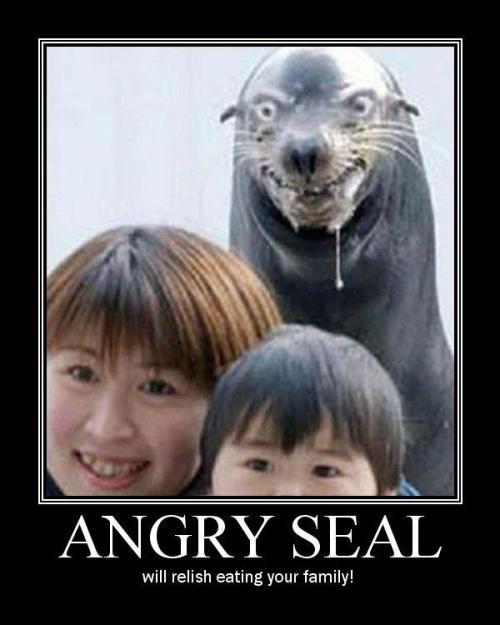 Spamalamadingdong! Angry-seal