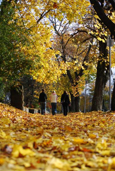 Fall walk (Medium)