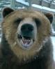 Bear; up close & personal